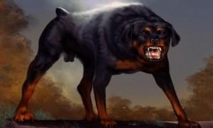 el-perro-negro